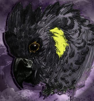 Black Cockatoo sketch color by Bennett-Burks