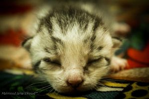 Tow-Day old kitten by M4fotos