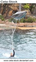 Dolphins 25 by Ceta-Stock