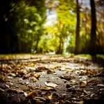 Autumn Light 2 by drkshp