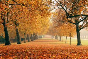 Fall in UK by uzblokuota