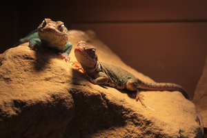 Basking Lizards by Geistson