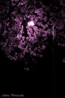 purple tree by alunna