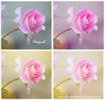 Soft roses action by EliseEnchanted
