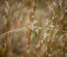 Orange Grass by inacom