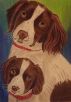 springer spaniel by shirls-art