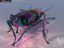 Psychedelic Fly by mbinz