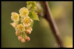 Ready to bloom by yenna-photo