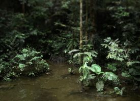 Borneo Jungle 2 by postaldude66