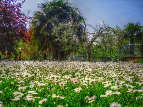 My flowered paradise by cortomaltese219