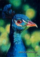 Peacock in Coloured Pencil by KathrynWhiteford