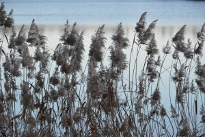 Reeds by A1Z2E3R