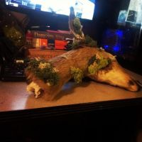 Rogue Taxidermy, Whitetail Fawn Doe Severed Head. by psychische