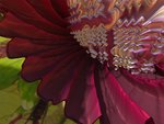 Fractal Flower Close Up by recycledrelatives