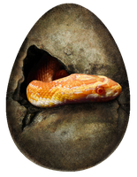 snake egg by kaileighblue