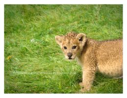 Little Lion, Big World by HeWhoWalksWithTigers