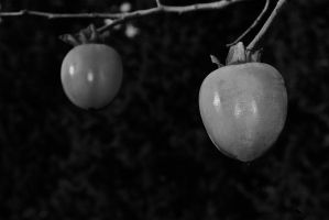 Persimmon 2 by jennystokes