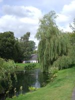 Weeping Willows by Partner-in-crime