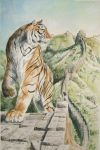 Tiger on the wall by nbeilke