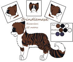 Brindlemask reference sheet by C1d1cy