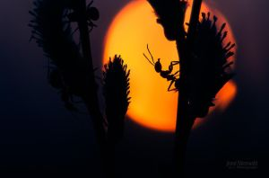 Ants At Dusk by Nitrok