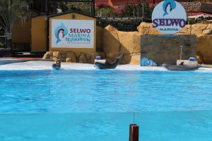 Spain, Dolphins Show by Gusiakus