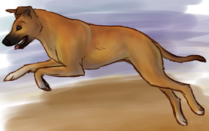 breeds:. Africanis by Bonz847