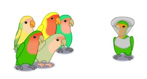 Cone of shame, lovebird version by Lintunen