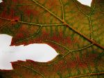 Day 164: Autumn is Here by BengalTiger4
