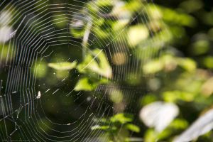 Web by Agulor