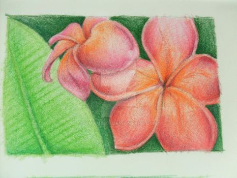 Plumeria Color Study by amymort