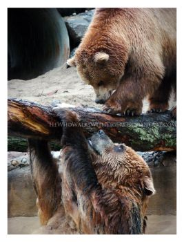 Bearly Hanging On by HeWhoWalksWithTigers
