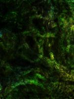 Fern Grotto by Cynnalia-Stock