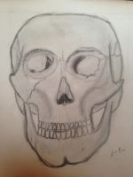 Skull by angelholmes