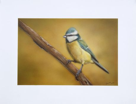 blue tit by airartmikel