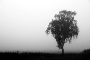 foggy morning by augenweide