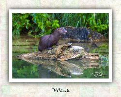 Mink by Merlinstouch