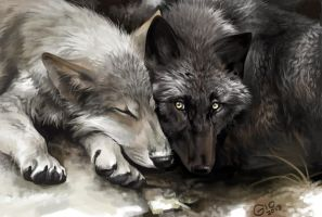 Wolves portrait or Are you awake? by giovannag