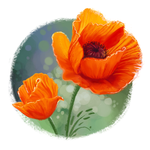 Poppies by katiepox