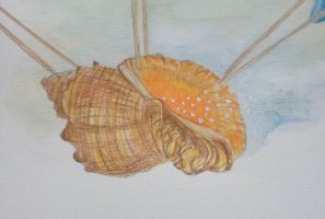 Shell, detail from thr illustration by Sikorax