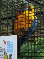 I'm positive it's Macaws by DeadDollsSociety