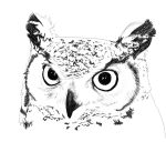 Great Horned Owl sketch by Golden-Plated