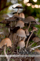 Toadstools by hokum-deadfall