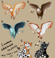 Owl Adoptables -30 points- by Hortensie-Stone