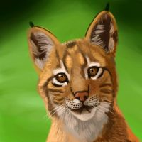 What's that? Baby Lynx Speedpaint by timohuovinen