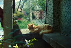 Cat in the shade by TeddyMarkov