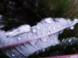 Tears Of A Torn Leaf by Namuamazing