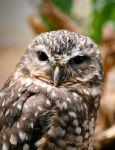 The All Knowing Owl by UNROMANTICIZED