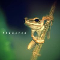 mr_frogster by deezigncorps