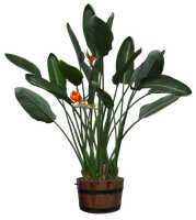 plants png-21 by DIGITALWIDERESOURCE